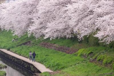 09-fujiwara
